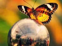 Бабочки своими руками — мастер класс по созданию бумажных бабочек для интерьере (50 фото)