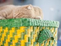 Плетение из газетных трубочек — пошаговая инструкция для начинающих, с фото
