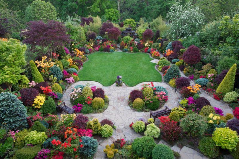 garden-azalea-flowers-in-early-summer